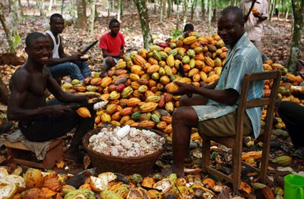 Photo of Three Ghanaian Farmers Shortlisted For 2019 Int'l Cocoa Awards Finals