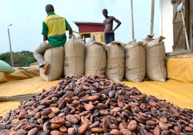 Photo of Ghana, Ivory Coast Looking To Regulate Cocoa Industry's Sustainability Schemes – Sources
