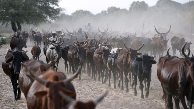 Photo of Chad 'Repaying $100m Debt To Angola With Cattle'