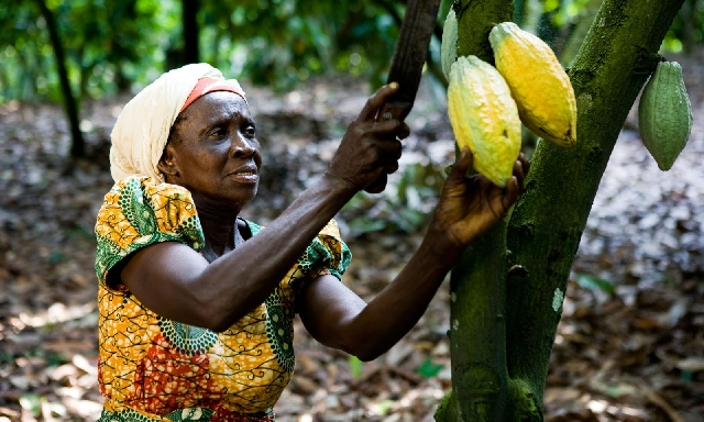 Photo of NDC Promises Free Healthcare For Cocoa Farmers